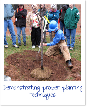 cville tree stewards 2009 - planting