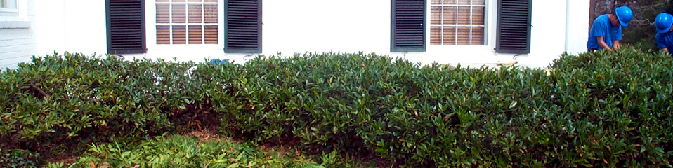 Homepage Banner - Shrub Prune