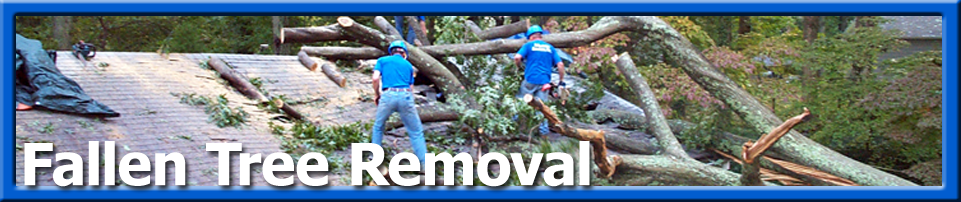 Emergency - Fallen Tree Removal