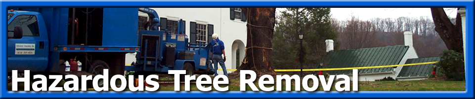 Emergency - Hazardous Tree Removal