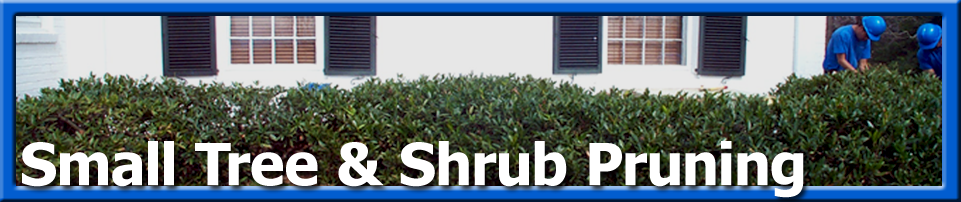Grounds Care - Small Tree Shrub Pruning