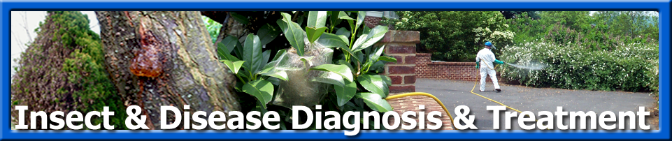 Plant Health Care - Insect Disease