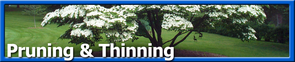 Tree Care - Pruning
